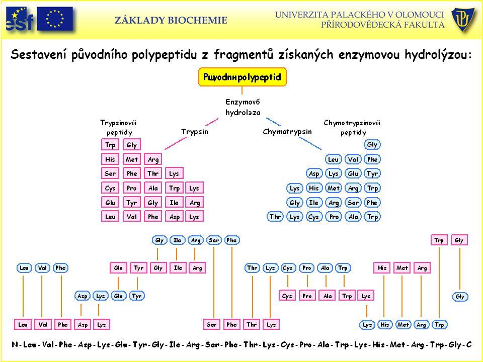 Sestavení původního polypeptidu z fragmentů získaných enzymovou hydrolýzou: