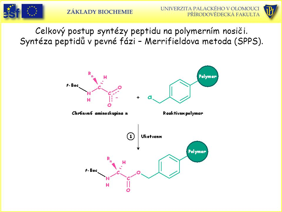 Celkový postup syntézy peptidu na polymerním nosiči.