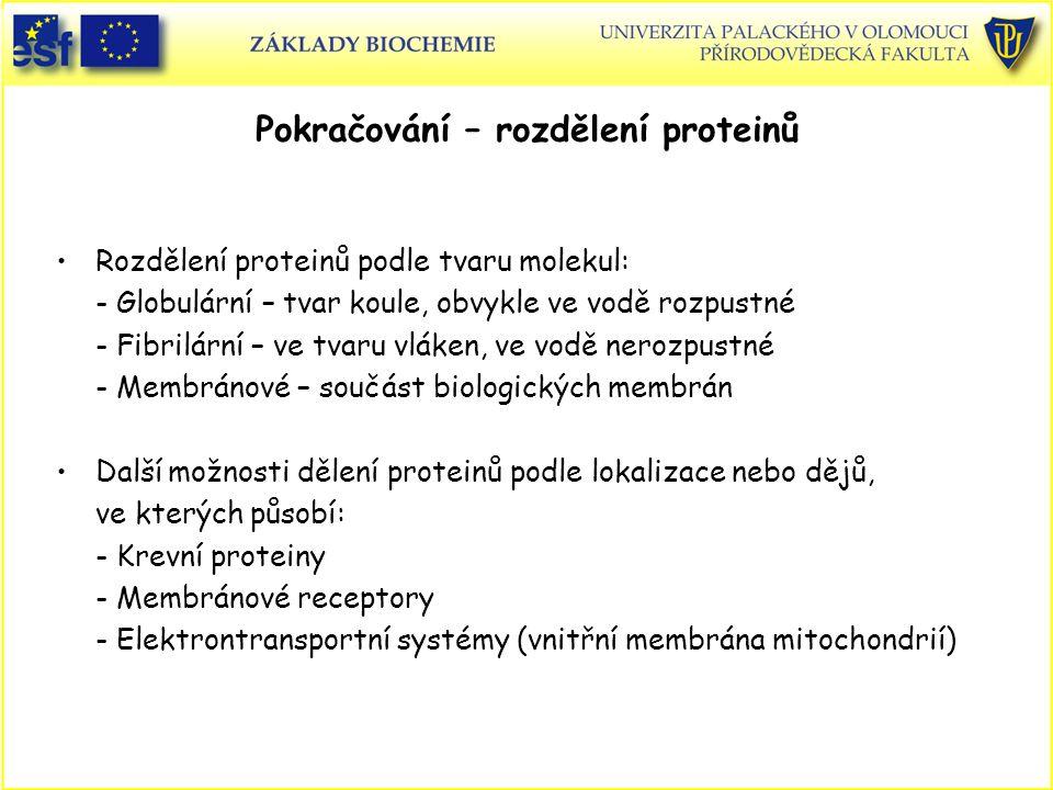 Pokračování – rozdělení proteinů Rozdělení proteinů podle tvaru molekul: - Globulární – tvar koule, obvykle ve vodě rozpustné - Fibrilární – ve tvaru vláken, ve vodě nerozpustné - Membránové – součást biologických membrán Další možnosti dělení proteinů podle lokalizace nebo dějů, ve kterých působí: - Krevní proteiny - Membránové receptory - Elektrontransportní systémy (vnitřní membrána mitochondrií)