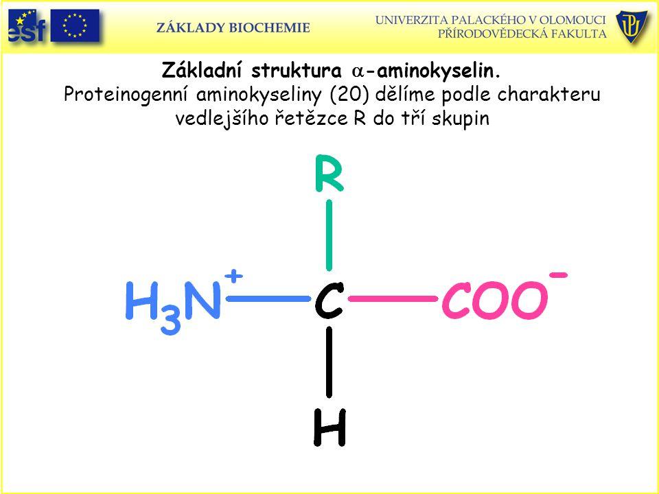 Přírodní peptidy Zvláštnosti struktury přírodních peptidů: - obsahují i neproteinogenní aminokyseliny - obsahují i D-aminokyseliny - isopetidové vazby (např.
