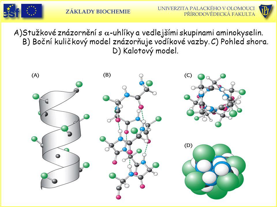 A)Stužkové znázornění s  -uhlíky a vedlejšími skupinami aminokyselin.