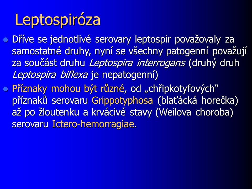 Leptospiróza Dříve se jednotlivé serovary leptospir považovaly za samostatné druhy, nyní se všechny patogenní považují za součást druhu Leptospira int