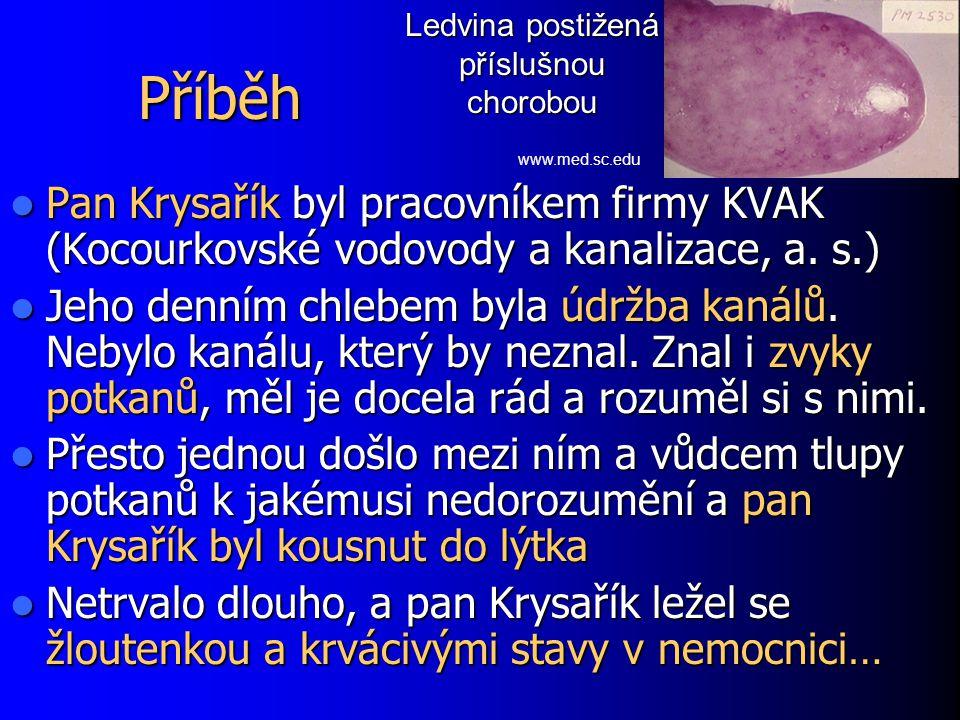 Příběh Pan Krysařík byl pracovníkem firmy KVAK (Kocourkovské vodovody a kanalizace, a. s.) Pan Krysařík byl pracovníkem firmy KVAK (Kocourkovské vodov