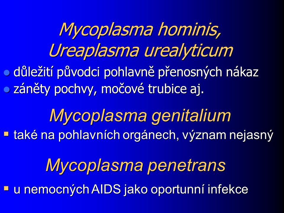 Mycoplasma hominis, Ureaplasma urealyticum důležití původci pohlavně přenosných nákaz důležití původci pohlavně přenosných nákaz záněty pochvy, močové