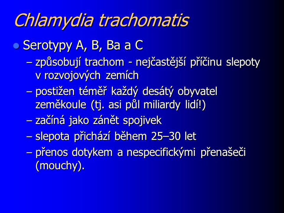 Chlamydia trachomatis Serotypy A, B, Ba a C Serotypy A, B, Ba a C – způsobují trachom - nejčastější příčinu slepoty v rozvojových zemích – postižen té