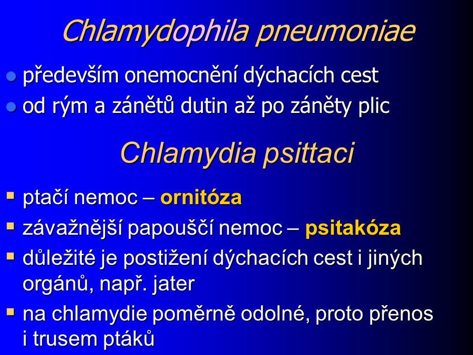 Chlamydophila pneumoniae především onemocnění dýchacích cest především onemocnění dýchacích cest od rým a zánětů dutin až po záněty plic od rým a záně