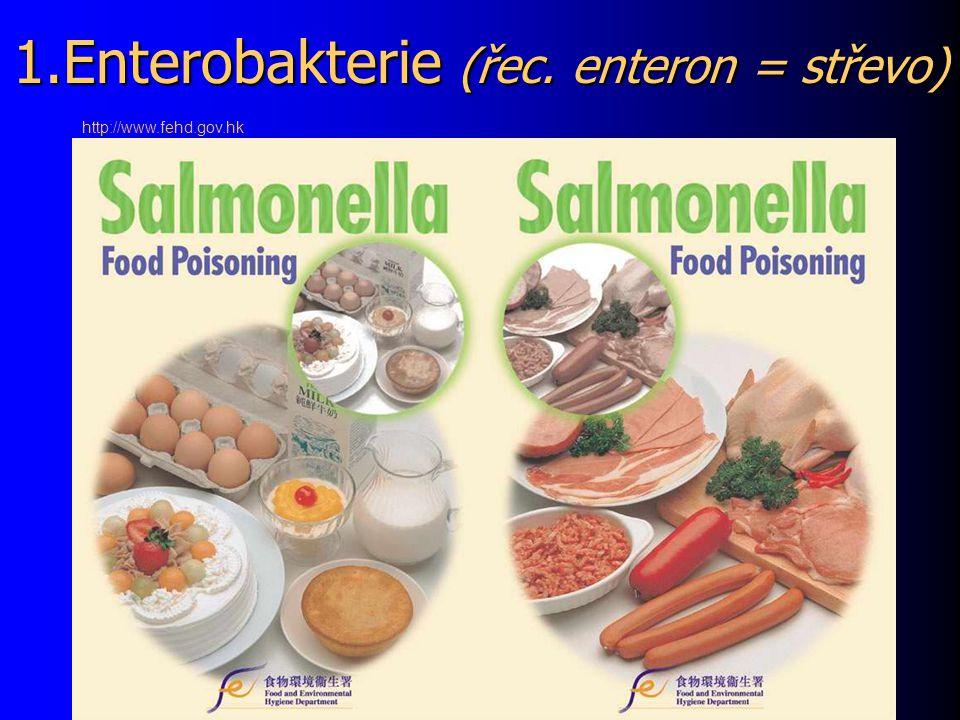 3. Mykobakteria, aktinomycety, nokardie http://www.genomeindia.org
