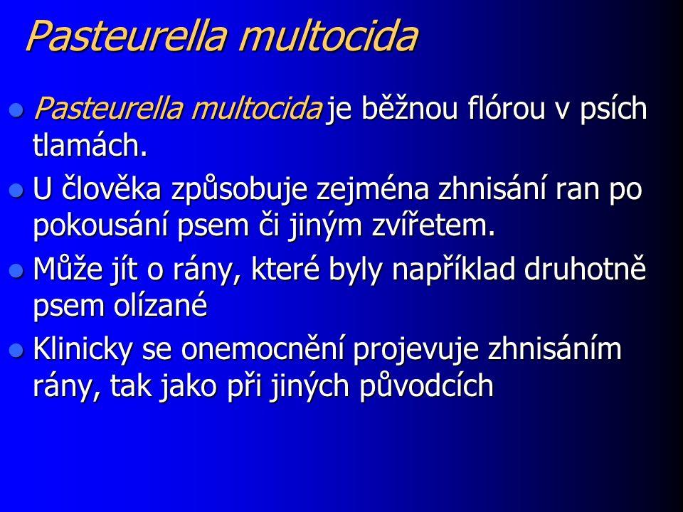 Pasteurella multocida Pasteurella multocida je běžnou flórou v psích tlamách. Pasteurella multocida je běžnou flórou v psích tlamách. U člověka způsob