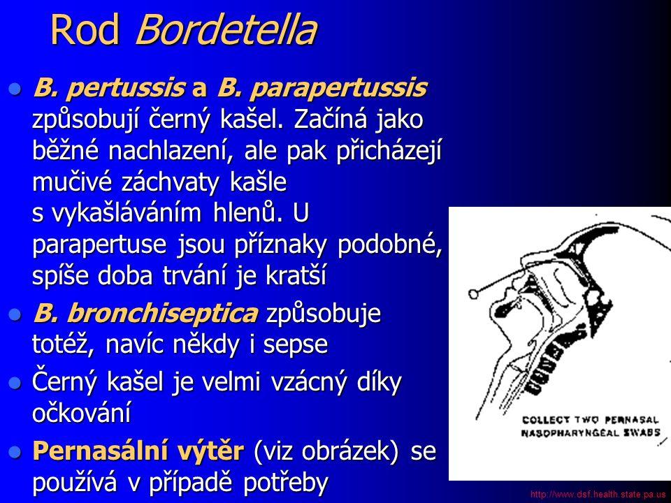Rod Bordetella B. pertussis a B. parapertussis způsobují černý kašel. Začíná jako běžné nachlazení, ale pak přicházejí mučivé záchvaty kašle s vykašlá