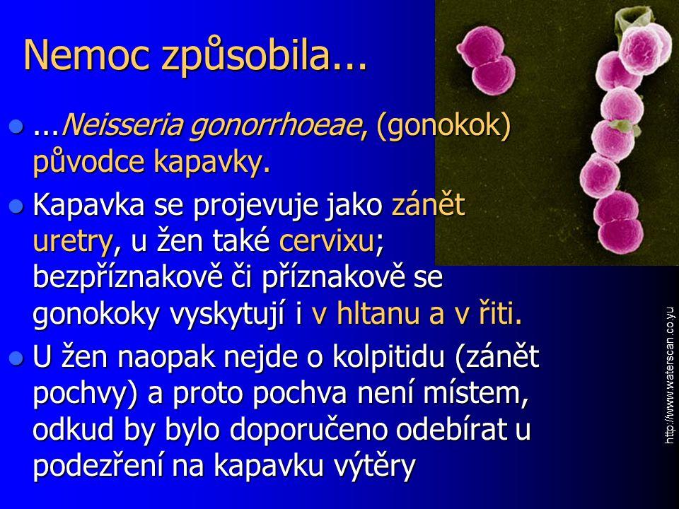 Nemoc způsobila......Neisseria gonorrhoeae, (gonokok) původce kapavky....Neisseria gonorrhoeae, (gonokok) původce kapavky. Kapavka se projevuje jako z