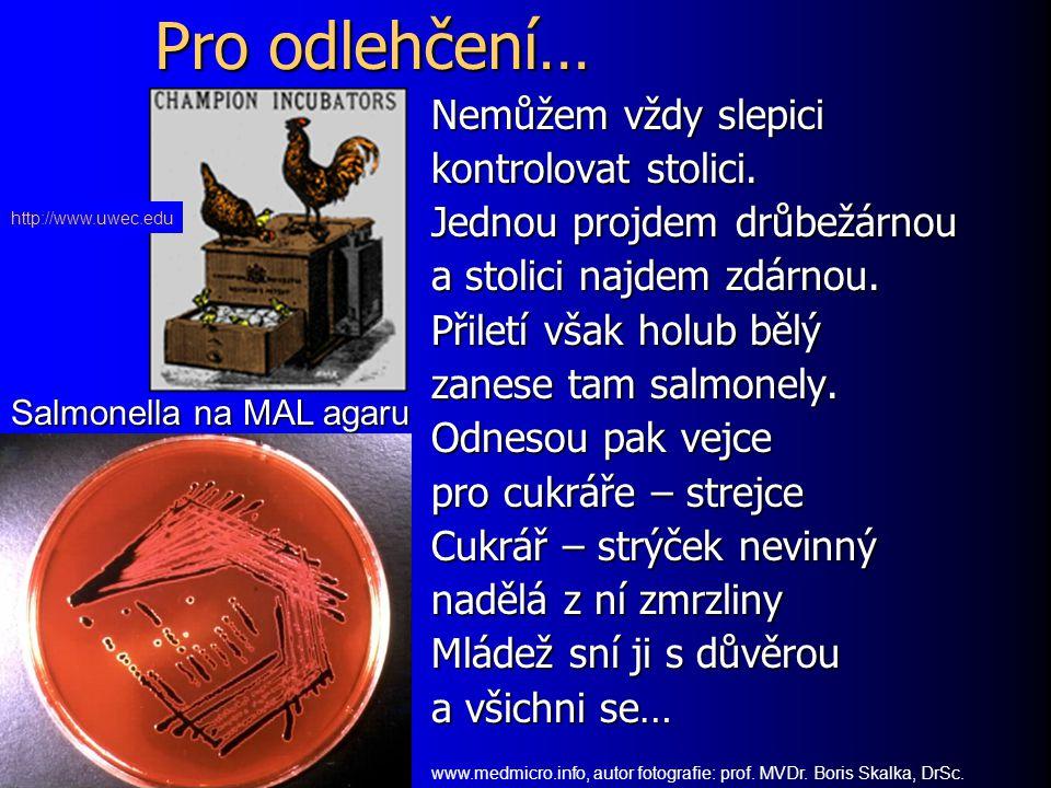 Syfilis www.med.sc.eduen.wikipedia.org