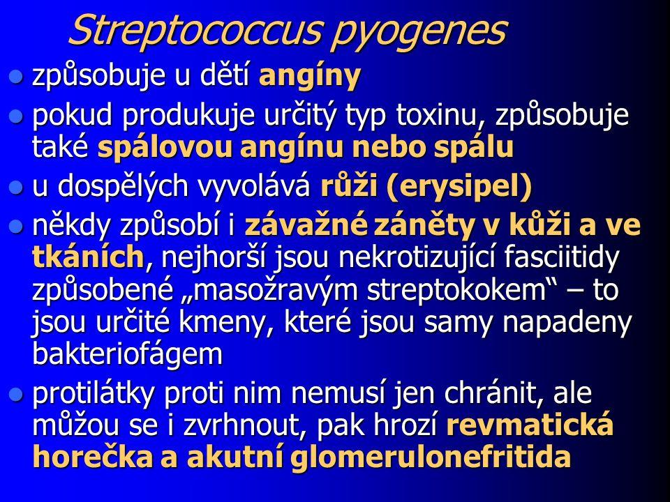 Streptococcus pyogenes způsobuje u dětí angíny způsobuje u dětí angíny pokud produkuje určitý typ toxinu, způsobuje také spálovou angínu nebo spálu po