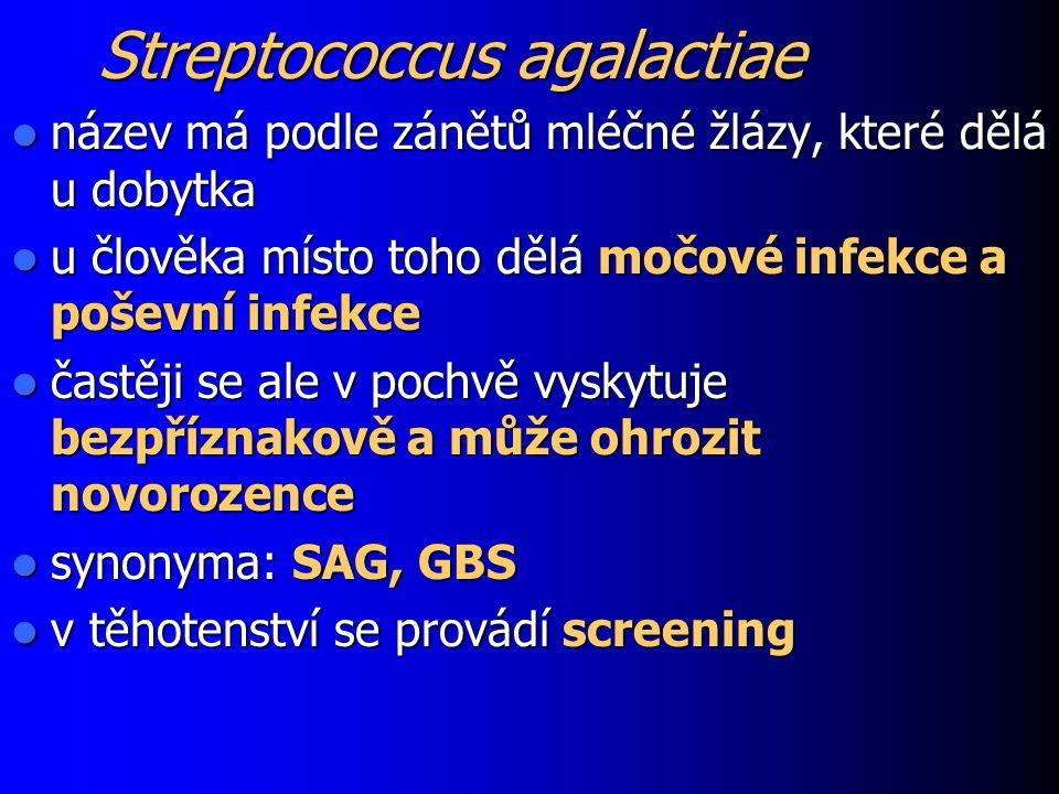 Streptococcus agalactiae název má podle zánětů mléčné žlázy, které dělá u dobytka název má podle zánětů mléčné žlázy, které dělá u dobytka u člověka m