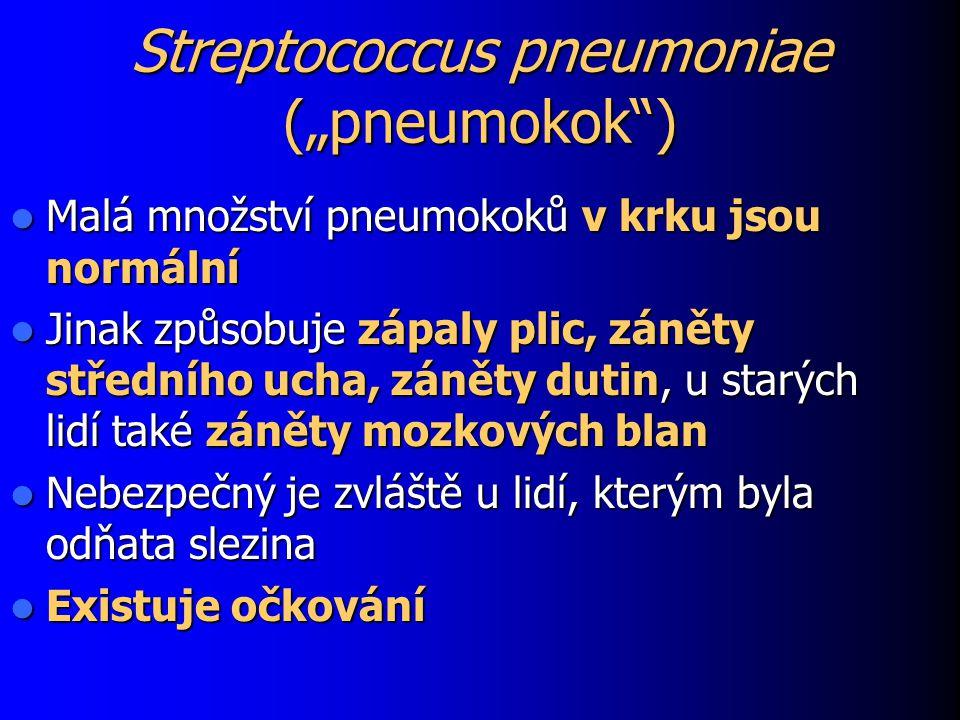 """Streptococcus pneumoniae (""""pneumokok"""") Malá množství pneumokoků v krku jsou normální Malá množství pneumokoků v krku jsou normální Jinak způsobuje záp"""