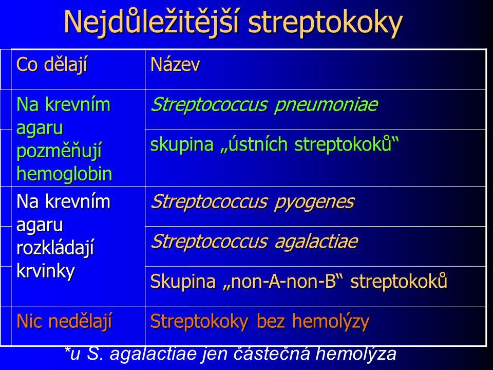 """Nejdůležitější streptokoky Co dělají Název Na krevním agaru pozměňují hemoglobin Streptococcus pneumoniae skupina """"ústních streptokoků"""" Na krevním aga"""