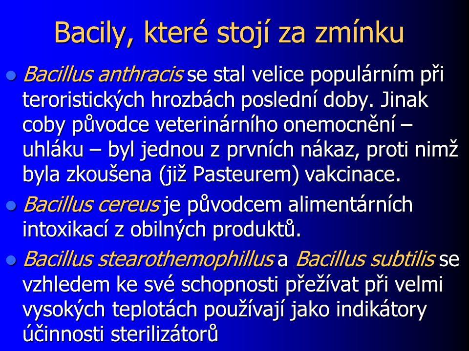 Bacily, které stojí za zmínku Bacillus anthracis se stal velice populárním při teroristických hrozbách poslední doby. Jinak coby původce veterinárního
