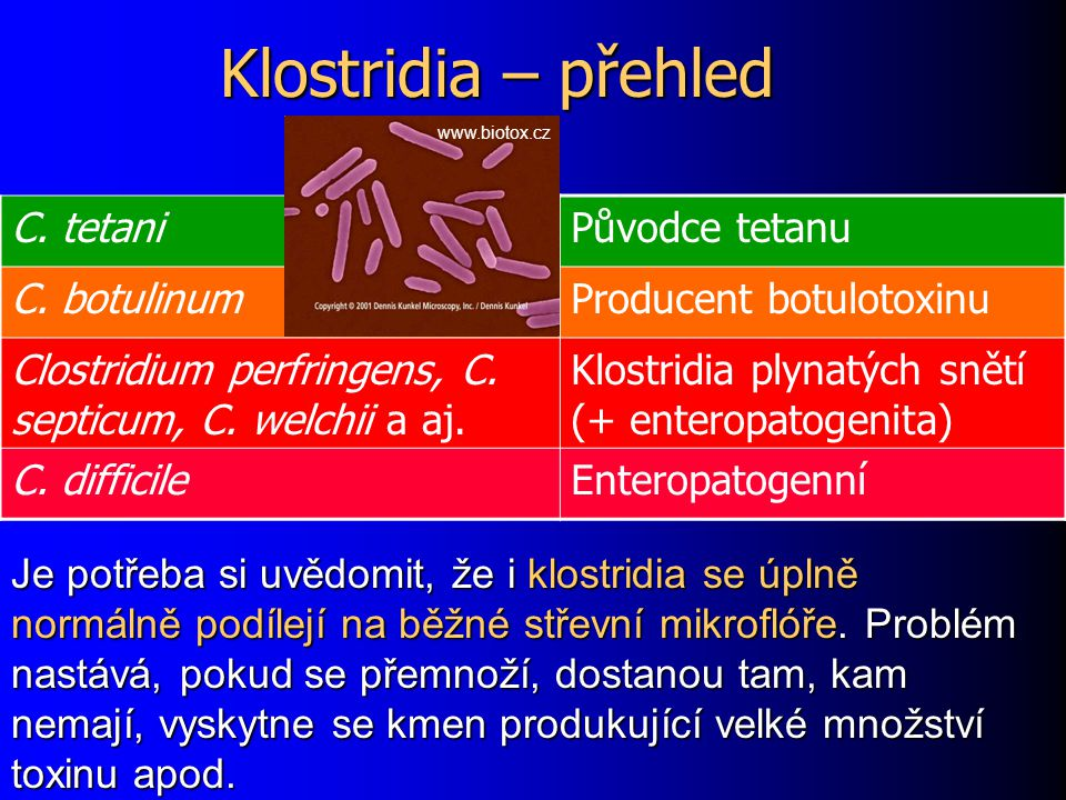 Klostridia – přehled C. tetaniPůvodce tetanu C. botulinumProducent botulotoxinu Clostridium perfringens, C. septicum, C. welchii a aj. Klostridia plyn