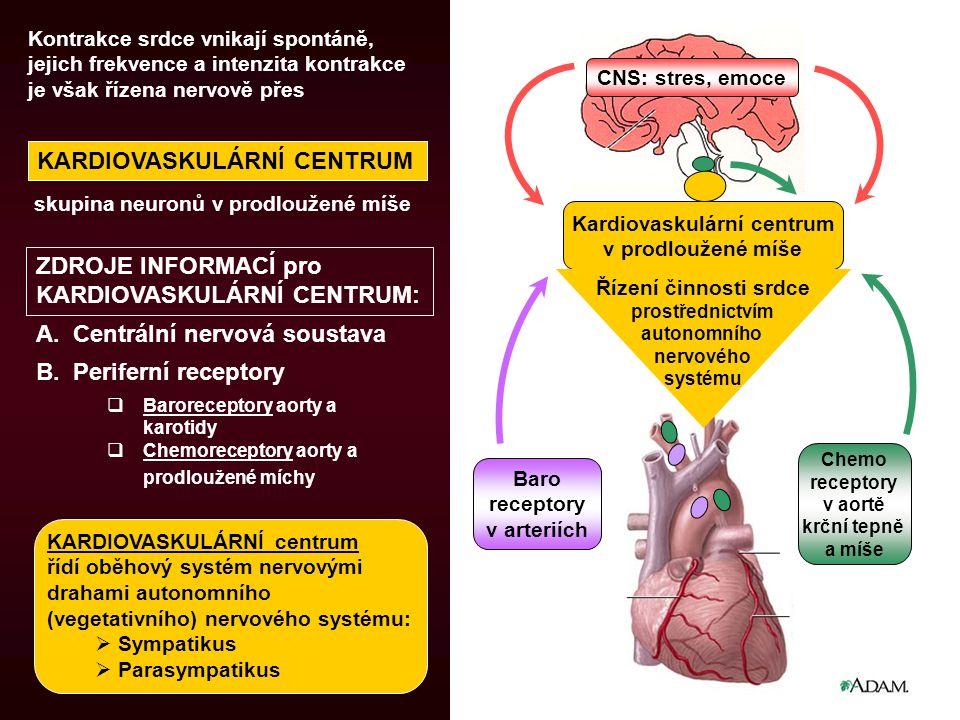 Kardiovaskulární centrum v prodloužené míše KARDIOVASKULÁRNÍ centrum řídí oběhový systém nervovými drahami autonomního (vegetativního) nervového systému:  Sympatikus  Parasympatikus B.