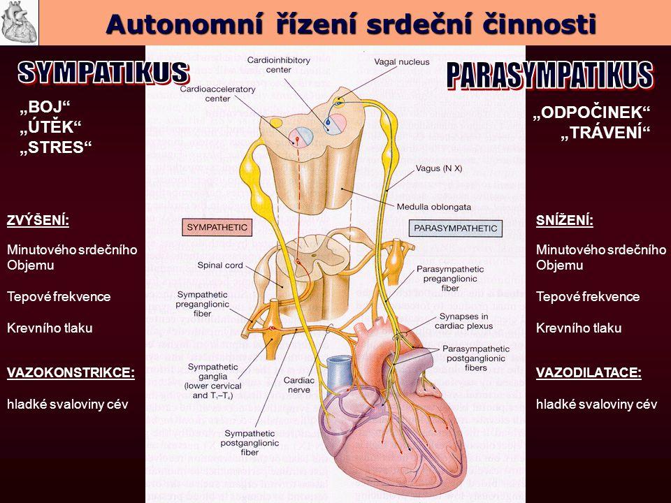 """""""BOJ """"ÚTĚK """"STRES ZVÝŠENÍ: Minutového srdečního Objemu Tepové frekvence Krevního tlaku VAZOKONSTRIKCE: hladké svaloviny cév """"ODPOČINEK """"TRÁVENÍ SNÍŽENÍ: Minutového srdečního Objemu Tepové frekvence Krevního tlaku VAZODILATACE: hladké svaloviny cév Autonomní řízení srdeční činnosti"""
