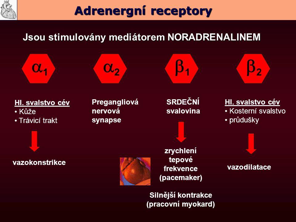 11 22 22 11 Hl. svalstvo cév Kůže Trávicí trakt SRDEČNÍ svalovina Hl. svalstvo cév Kosterní svalstvo průdušky Pregangliová nervová synapse vaz