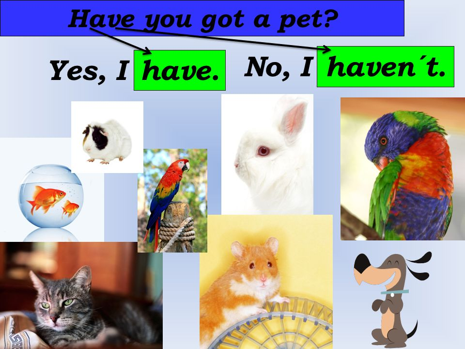 Have you got a pet Yes, I have. No, I haven´t.