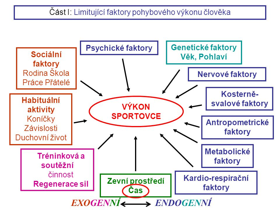 VÝKON SPORTOVCE Genetické faktory Věk, Pohlaví Antropometrické faktory Nervové faktory Kosterně- svalové faktory Metabolické faktory Kardio-respirační