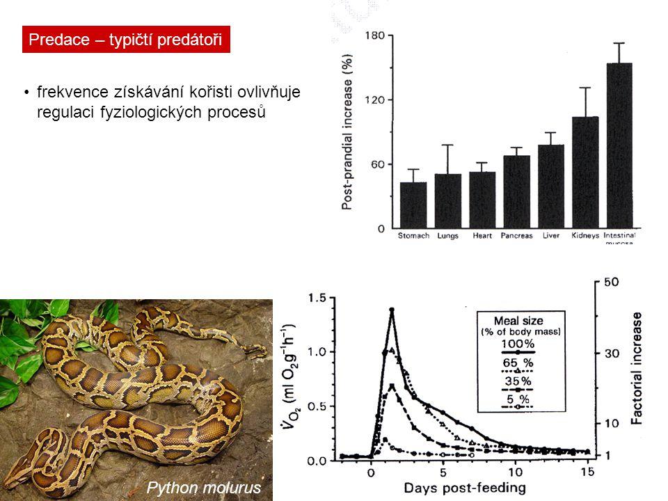 Predace – typičtí predátoři frekvence získávání kořisti ovlivňuje regulaci fyziologických procesů Python molurus