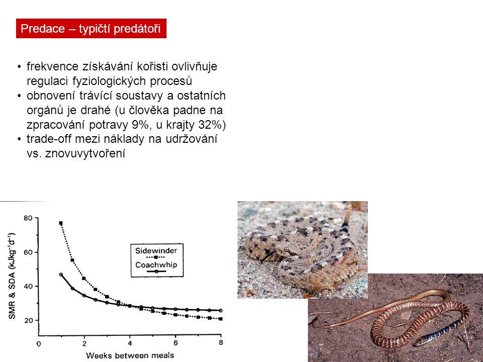 Predace – typičtí predátoři frekvence získávání kořisti ovlivňuje regulaci fyziologických procesů obnovení trávící soustavy a ostatních orgánů je drah