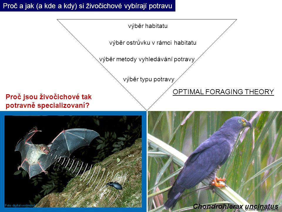 Chondrohierax uncinatus Proč a jak (a kde a kdy) si živočichové vybírají potravu výběr habitatu výběr ostrůvku v rámci habitatu výběr metody vyhledávání potravy výběr typu potravy Proč jsou živočichové tak potravně specializovaní.