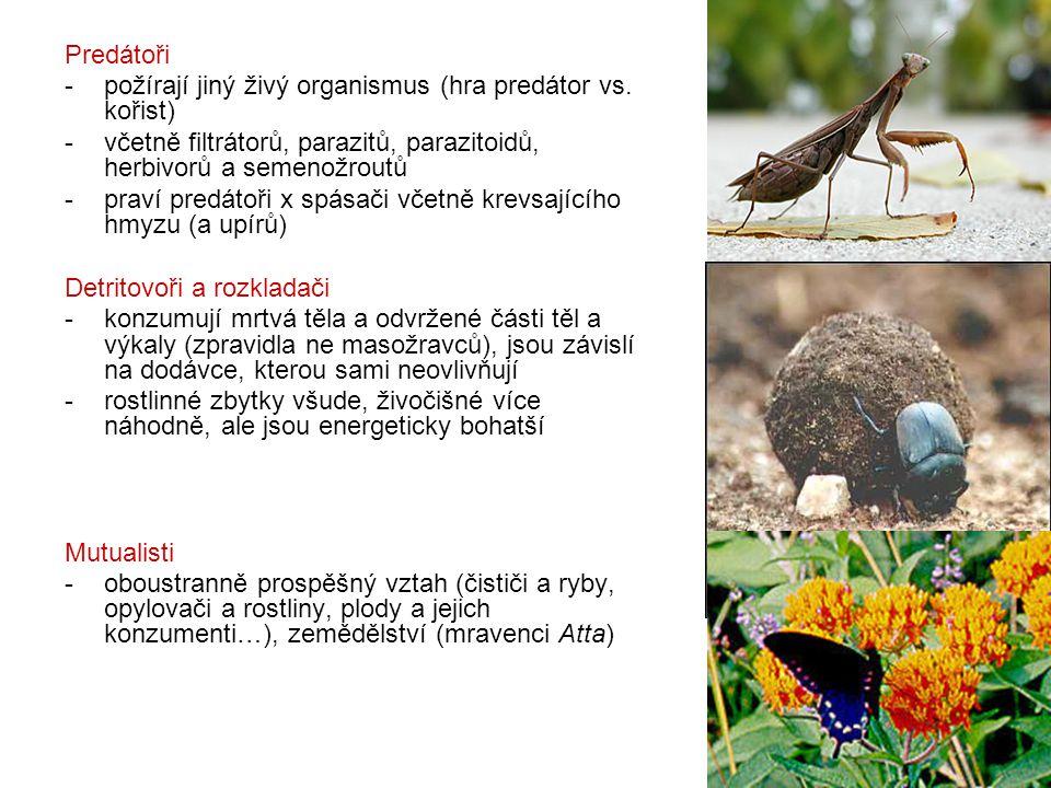 Predátoři - požírají jiný živý organismus (hra predátor vs. kořist) -včetně filtrátorů, parazitů, parazitoidů, herbivorů a semenožroutů -praví predáto