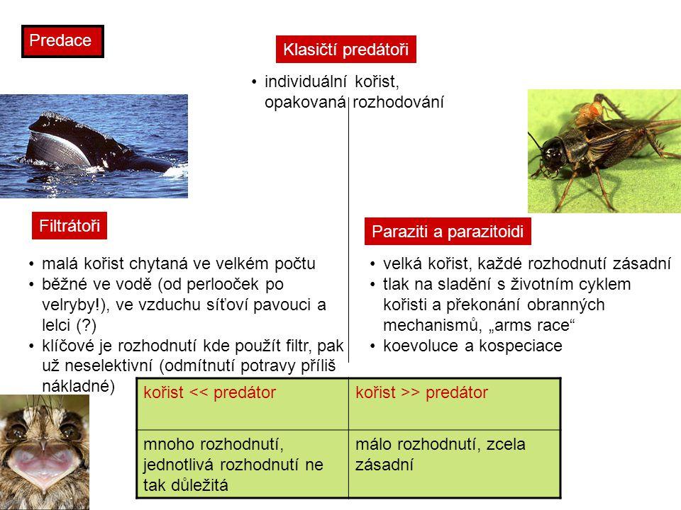 """Predace kořist << predátorkořist >> predátor mnoho rozhodnutí, jednotlivá rozhodnutí ne tak důležitá málo rozhodnutí, zcela zásadní Filtrátoři malá kořist chytaná ve velkém počtu běžné ve vodě (od perlooček po velryby!), ve vzduchu síťoví pavouci a lelci (?) klíčové je rozhodnutí kde použít filtr, pak už neselektivní (odmítnutí potravy příliš nákladné) Paraziti a parazitoidi velká kořist, každé rozhodnutí zásadní tlak na sladění s životním cyklem kořisti a překonání obranných mechanismů, """"arms race koevoluce a kospeciace Klasičtí predátoři individuální kořist, opakovaná rozhodování"""