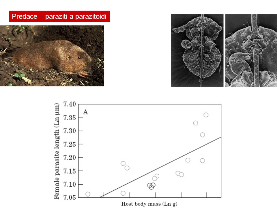 Proč a jak (a kde a kdy) si živočichové vybírají potravu Lepomis macrochirus Micropterus salmoides Výběr habitatu závisí taky na přítomnosti predátorů