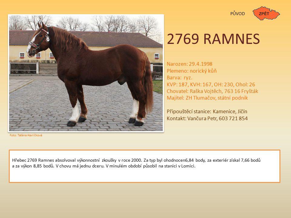 2769 RAMNES PŮVOD Narozen: 29.4.1998 Plemeno: norický kůň Barva: ryz.