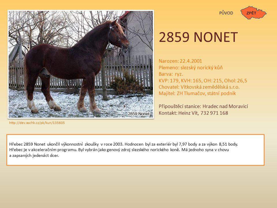 2859 NONET PŮVOD Narozen: 22.4.2001 Plemeno: slezský norický kůň Barva: ryz.