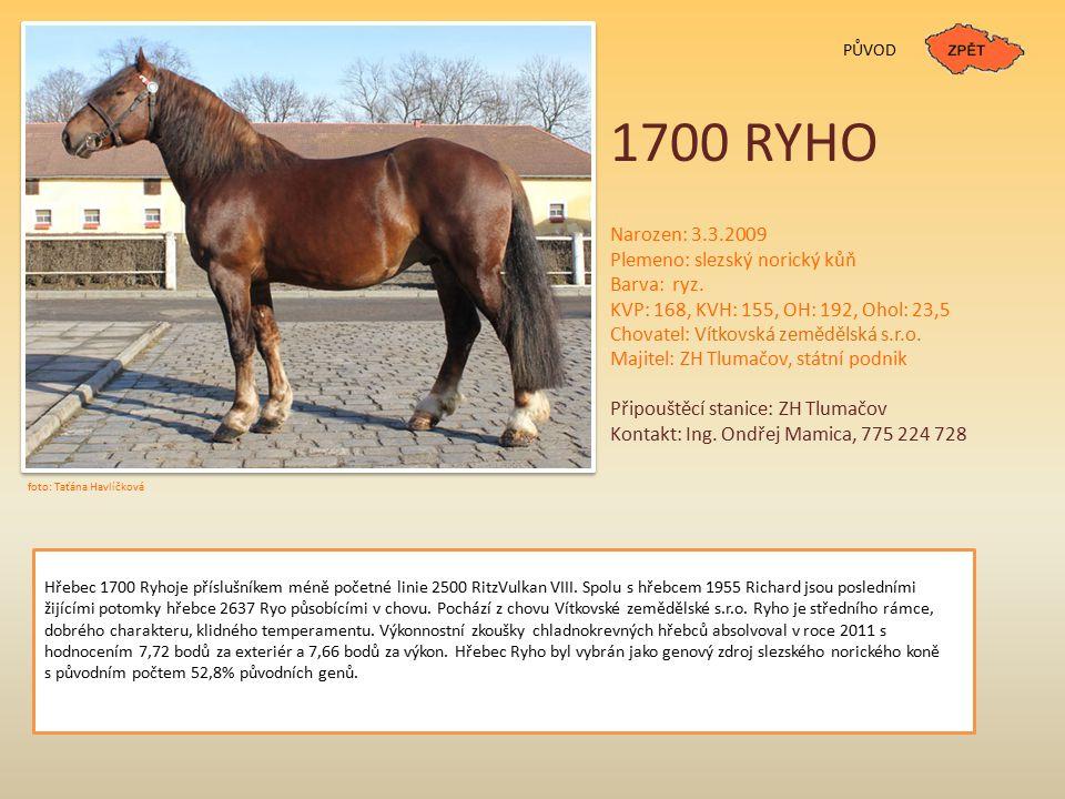 1700 RYHO PŮVOD Narozen: 3.3.2009 Plemeno: slezský norický kůň Barva: ryz. KVP: 168, KVH: 155, OH: 192, Ohol: 23,5 Chovatel: Vítkovská zemědělská s.r.
