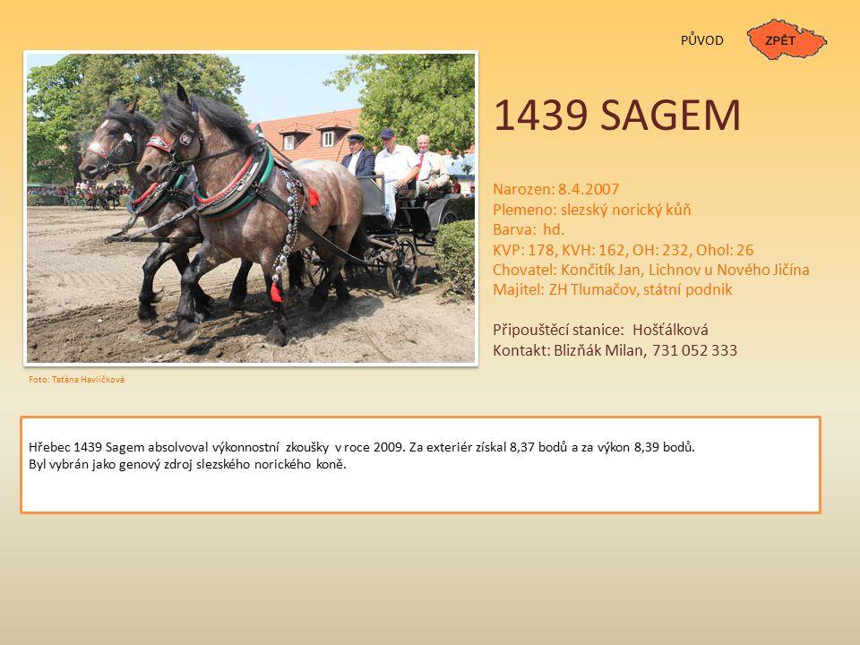 1439 SAGEM PŮVOD Narozen: 8.4.2007 Plemeno: slezský norický kůň Barva: hd. KVP: 178, KVH: 162, OH: 232, Ohol: 26 Chovatel: Končitík Jan, Lichnov u Nov