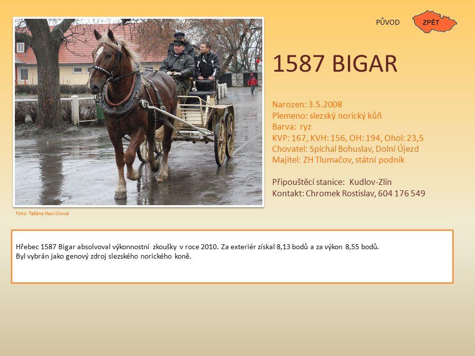 1587 BIGAR Narozen: 3.5.2008 Plemeno: slezský norický kůň Barva: ryz KVP: 167, KVH: 156, OH: 194, Ohol: 23,5 Chovatel: Spíchal Bohuslav, Dolní Újezd M