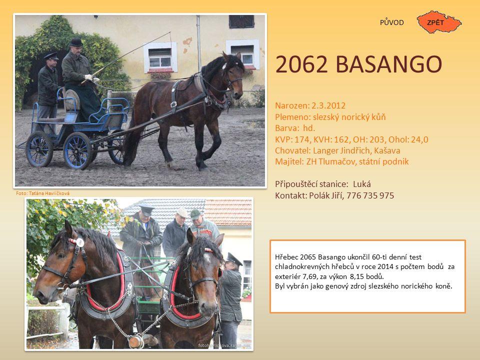 PŮVOD 2062 BASANGO Narozen: 2.3.2012 Plemeno: slezský norický kůň Barva: hd. KVP: 174, KVH: 162, OH: 203, Ohol: 24,0 Chovatel: Langer Jindřich, Kašava