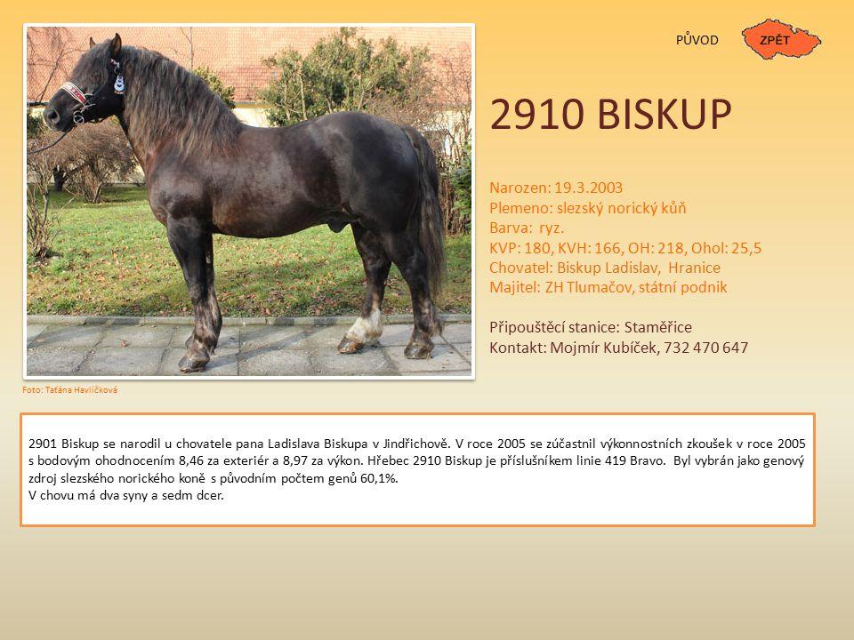 PŮVOD 2910 BISKUP Narozen: 19.3.2003 Plemeno: slezský norický kůň Barva: ryz.