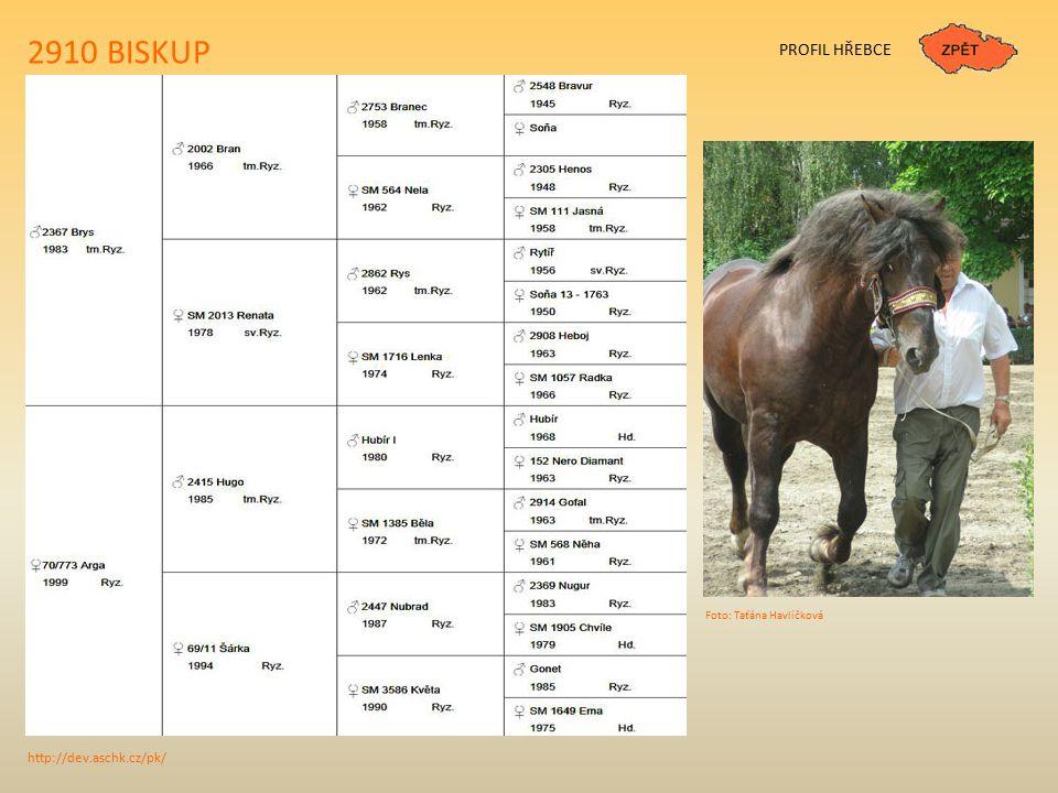 1700 RYHO PŮVOD Narozen: 3.3.2009 Plemeno: slezský norický kůň Barva: ryz.