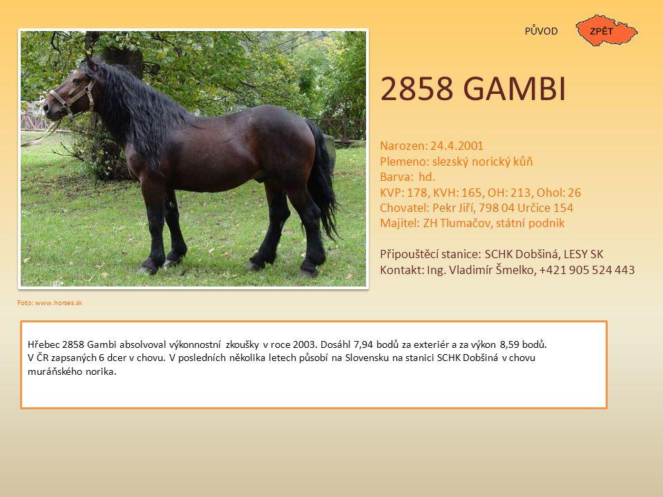 PŮVOD 2858 GAMBI Narozen: 24.4.2001 Plemeno: slezský norický kůň Barva: hd.