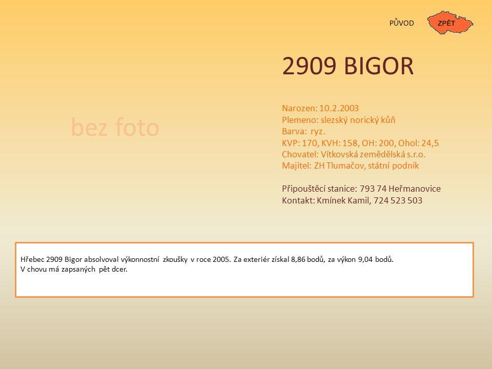 PŮVOD 2909 BIGOR Narozen: 10.2.2003 Plemeno: slezský norický kůň Barva: ryz.