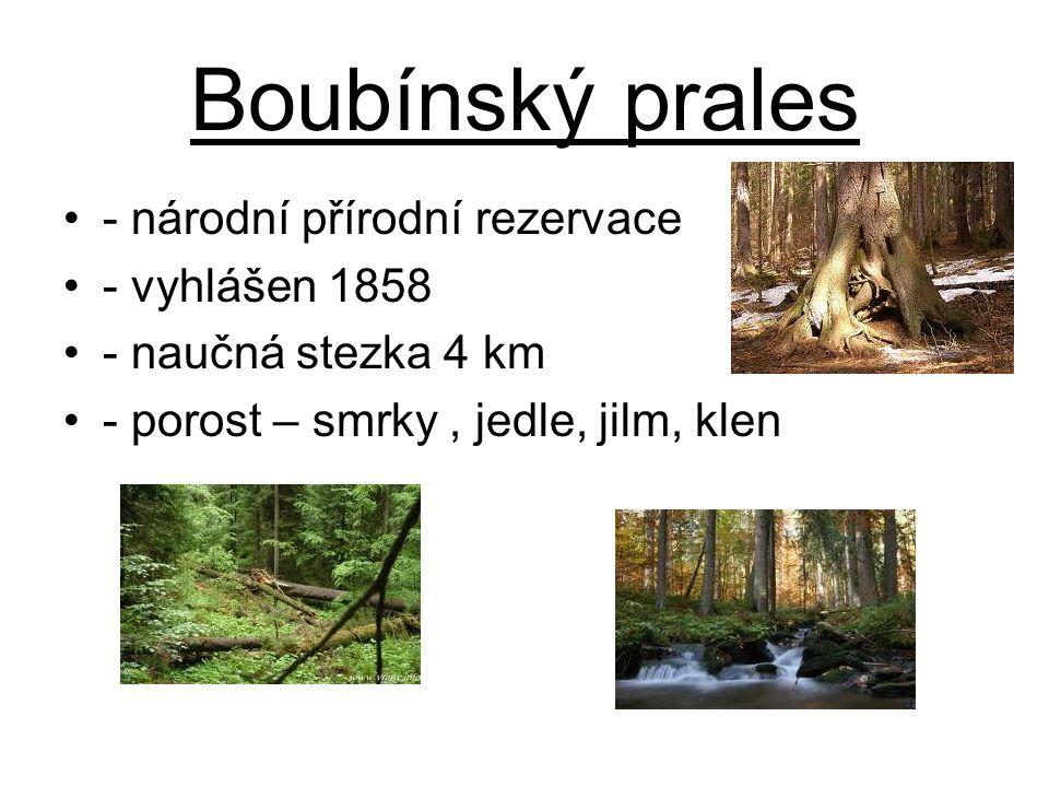 Boubínský prales - národní přírodní rezervace - vyhlášen 1858 - naučná stezka 4 km - porost – smrky, jedle, jilm, klen