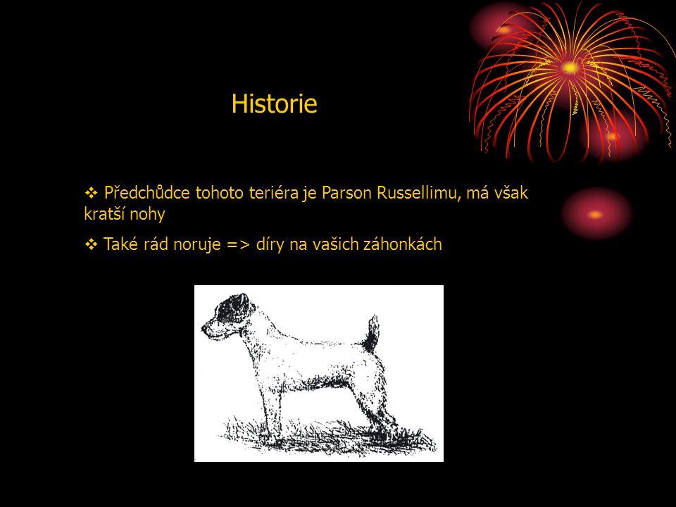 Historie  Předchůdce tohoto teriéra je Parson Russellimu, má však kratší nohy  Také rád noruje => díry na vašich záhonkách