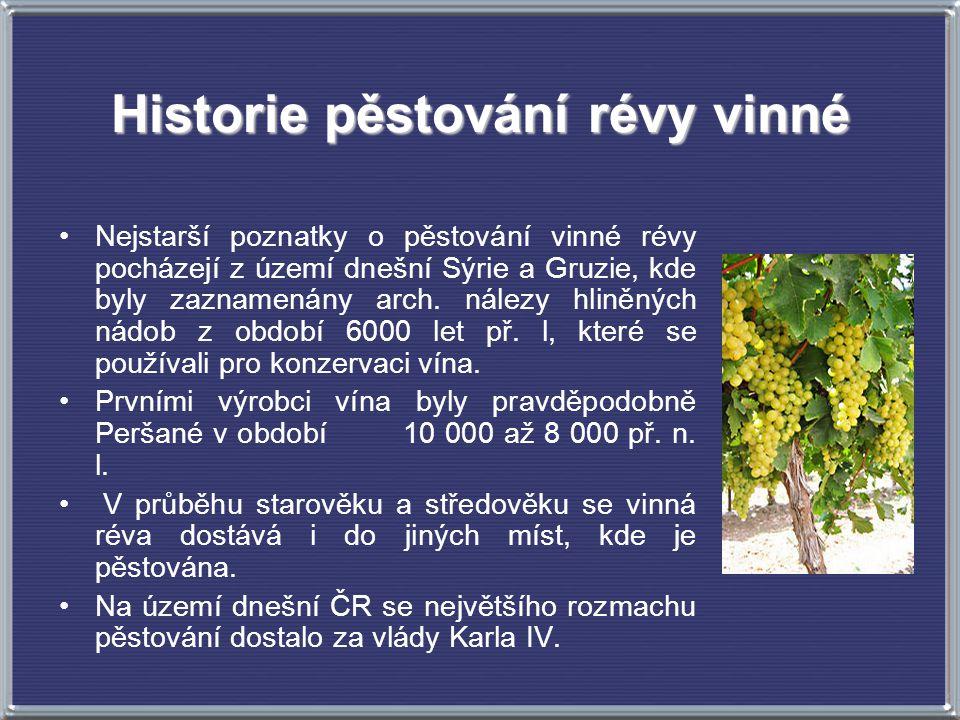 Historie pěstování révy vinné Nejstarší poznatky o pěstování vinné révy pocházejí z území dnešní Sýrie a Gruzie, kde byly zaznamenány arch. nálezy hli