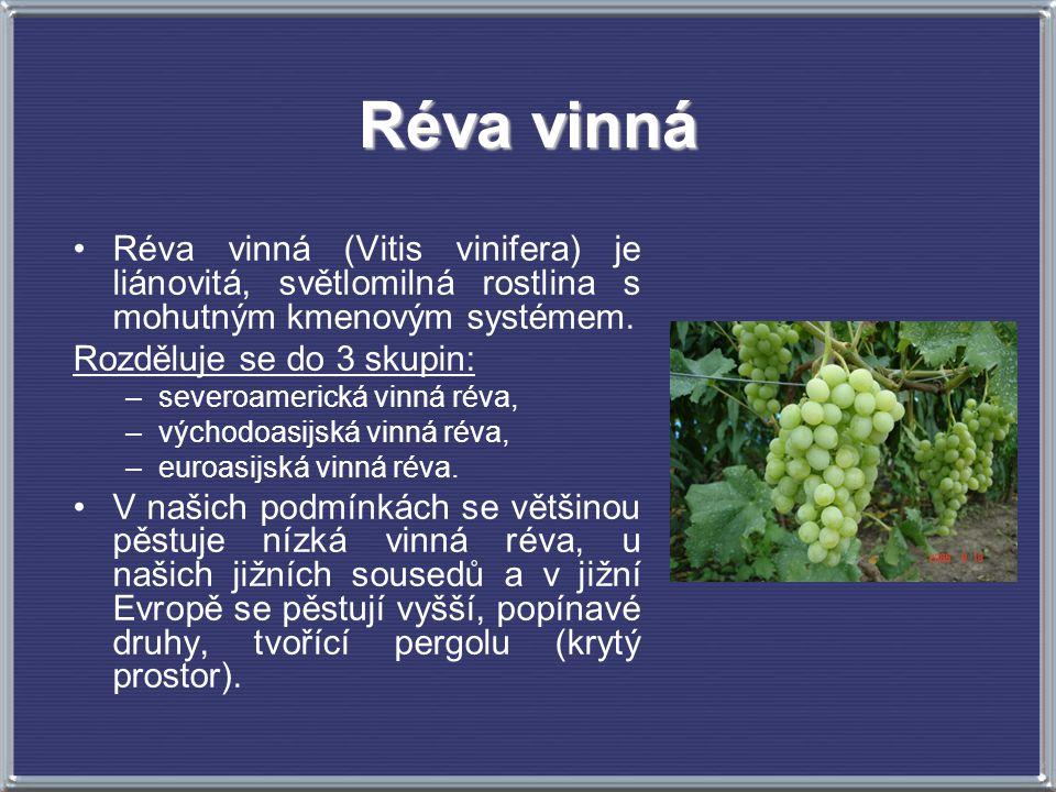 Réva vinná Réva vinná (Vitis vinifera) je liánovitá, světlomilná rostlina s mohutným kmenovým systémem. Rozděluje se do 3 skupin: –severoamerická vinn