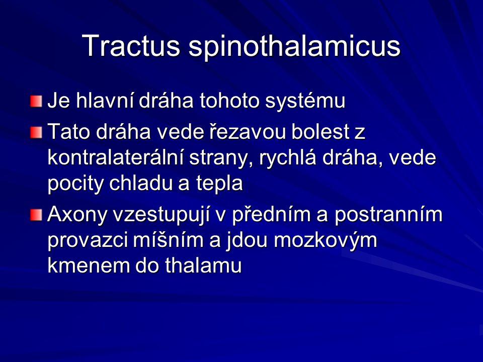 Tractus spinothalamicus Je hlavní dráha tohoto systému Tato dráha vede řezavou bolest z kontralaterální strany, rychlá dráha, vede pocity chladu a tep
