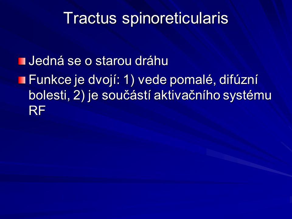 Tractus spinoreticularis Jedná se o starou dráhu Funkce je dvojí: 1) vede pomalé, difúzní bolesti, 2) je součástí aktivačního systému RF