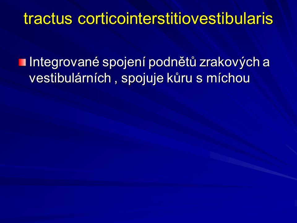 tractus corticointerstitiovestibularis Integrované spojení podnětů zrakových a vestibulárních, spojuje kůru s míchou
