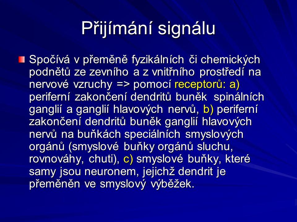 Přijímání signálu Spočívá v přeměně fyzikálních či chemických podnětů ze zevního a z vnitřního prostředí na nervové vzruchy => pomocí receptorů: a) pe